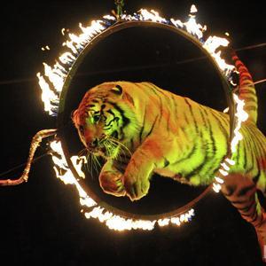 Цирки Красного-на-Волге