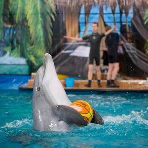 Дельфинарии, океанариумы Красного-на-Волге