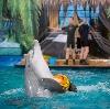 Дельфинарии, океанариумы в Красном-на-Волге